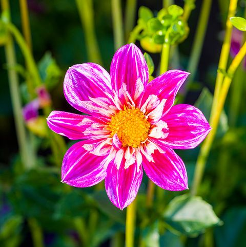 33 Pretty Flower Images Best Types Of Flowers For Your Garden