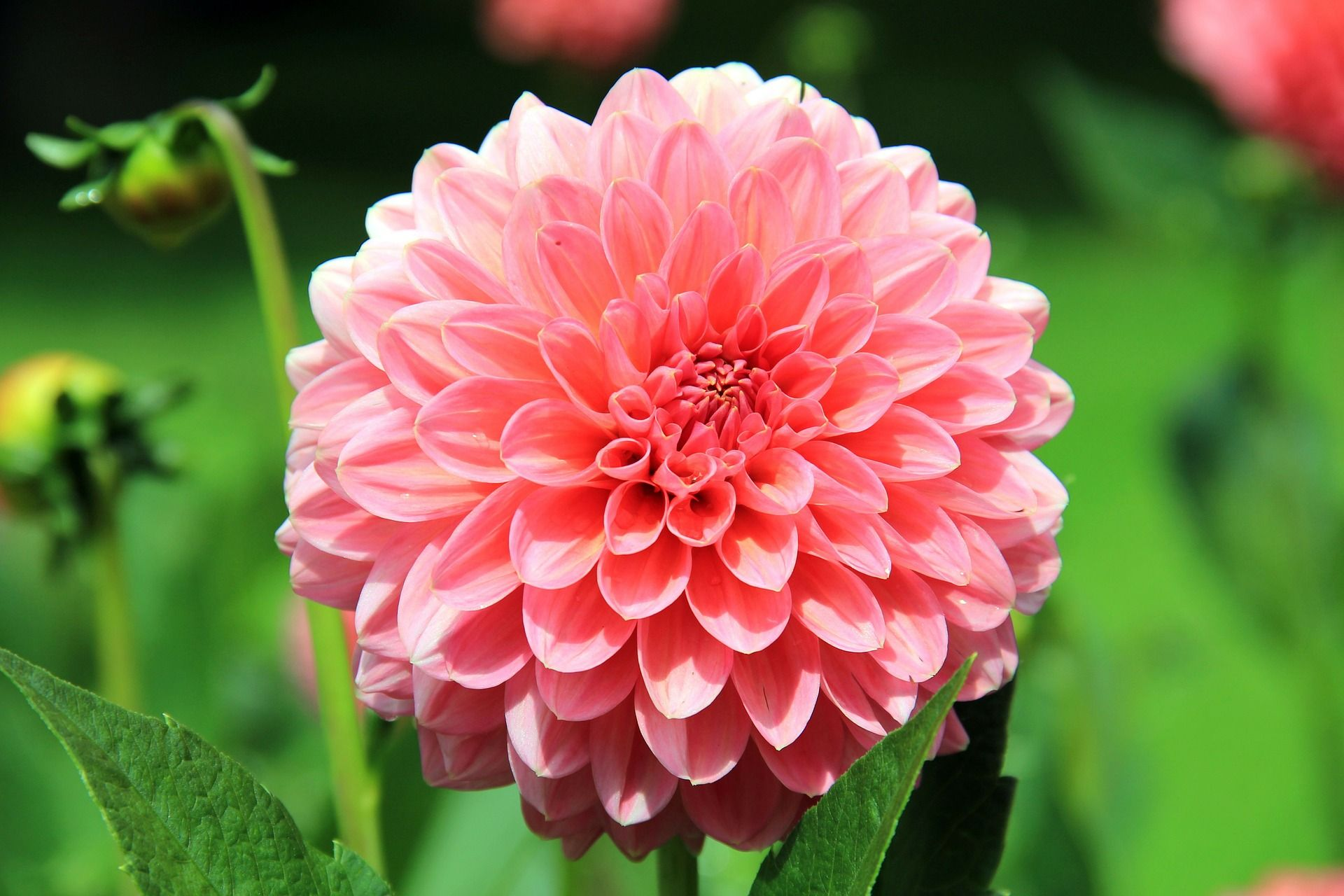 10 Summer Flowers That Bloom In July Best Seasonal Flowers Uk