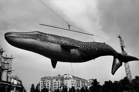 Daido Moriyama, balena gonfiabile,skylineParigi