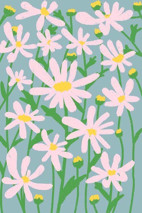 Daisy Care How To Plant Grow Outdoor Daisy Flowers In A Garden