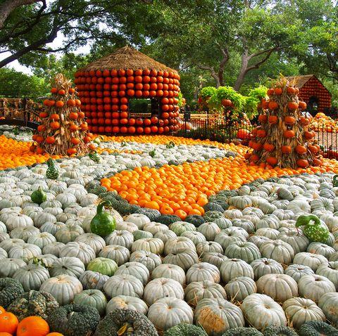dallas arboretum best pumpkin patches in the us