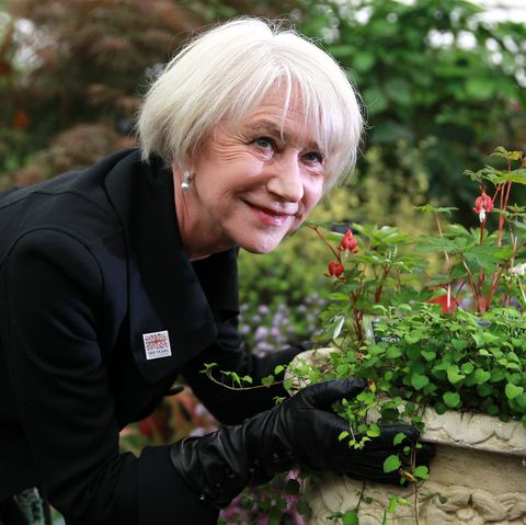 Chelsea Flower Show - Press & VIP Preview Day