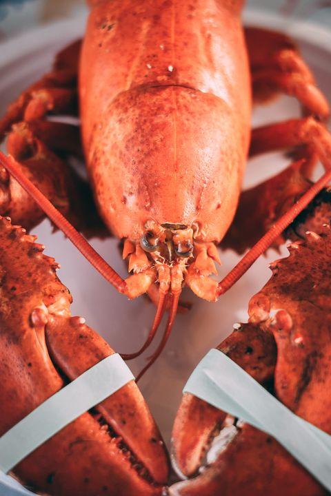 American lobster, Food, Lobster, Homarus, Seafood, Dish, Homarus gammarus, Cajun food, Decapoda, Spiny lobster,
