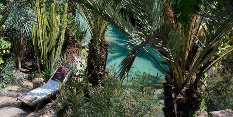 Woody plant, Terrestrial plant, Arecales, Jungle, Tropics, Palm tree, Outdoor furniture, Sabal minor, Cycad, Paurotis Palm,