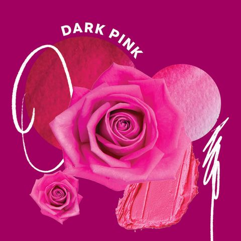 hot pink rose meaning