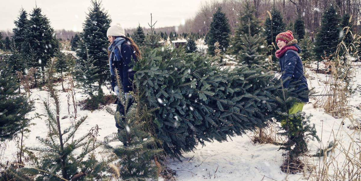 How to Keep a Christmas Tree Fresh Longer - How to Make Your Christmas Tree  Last - How To Keep A Christmas Tree Fresh Longer - How To Make Your