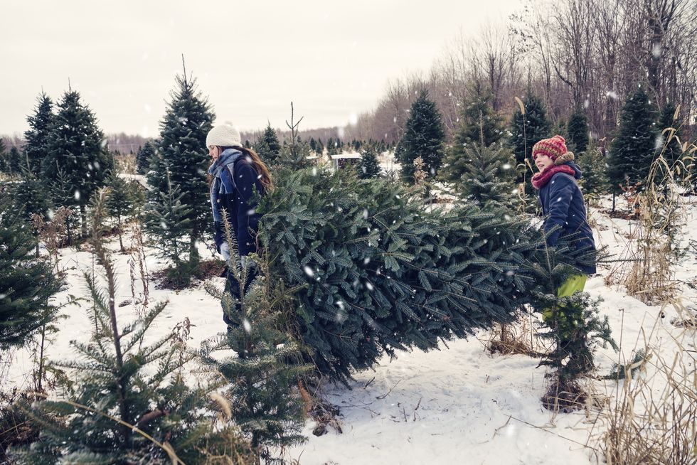 Here's How to Keep Your Christmas Tree Fresh Longer