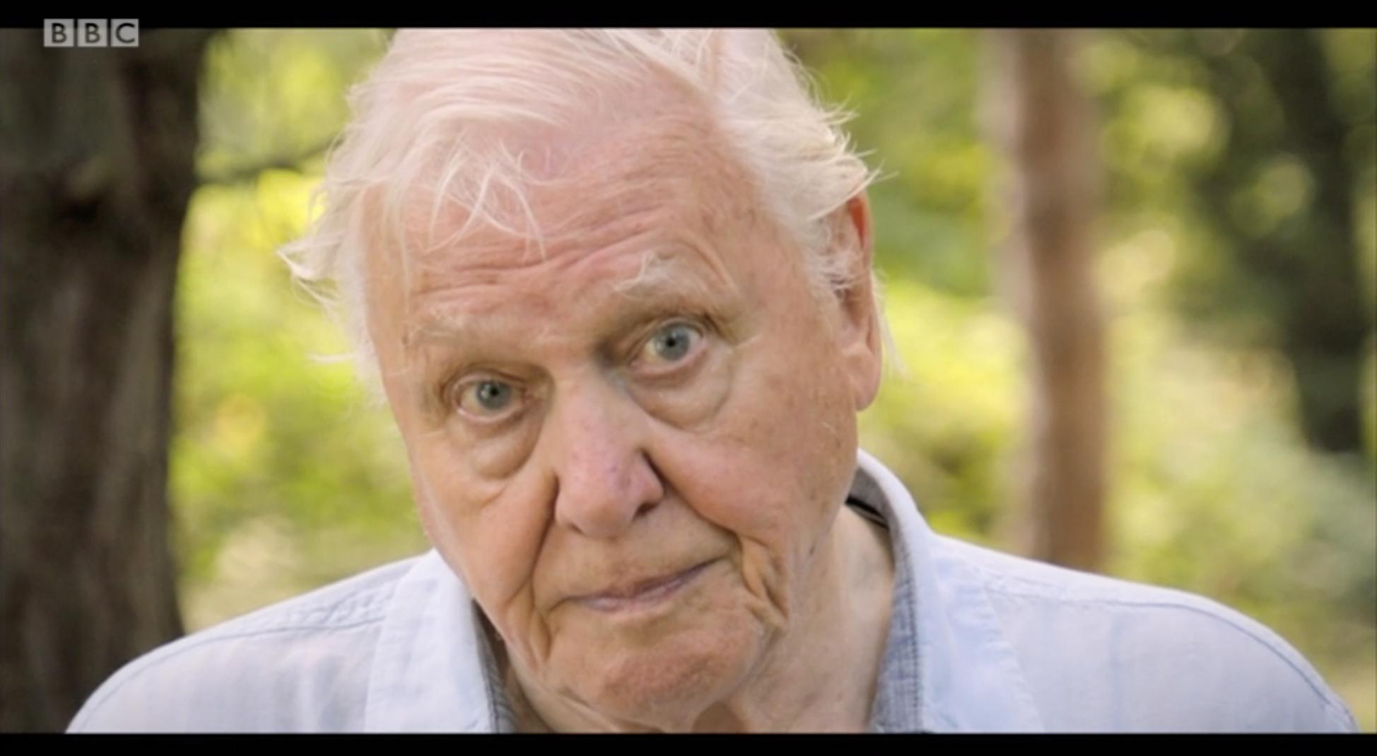 Sir David Attenborough's new documentary terrifies viewers