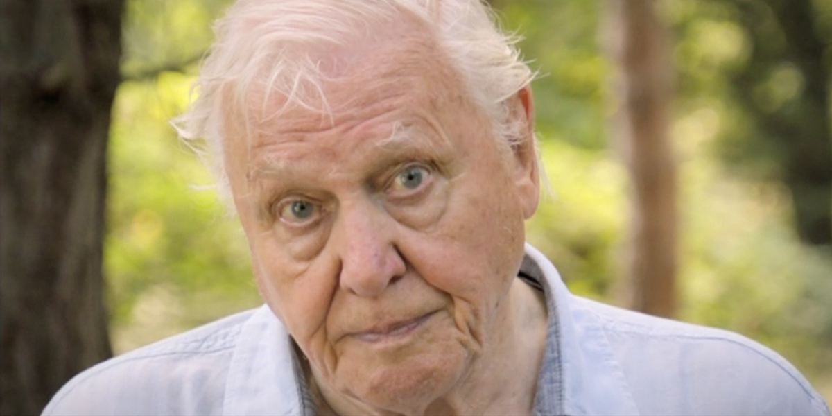 BBC One viewers left 'terrified' by Sir David Attenborough's new documentary Extinction: The Facts