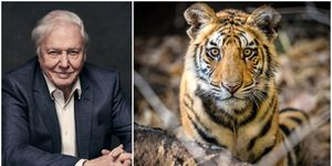 David Attenborough Dynasties photo