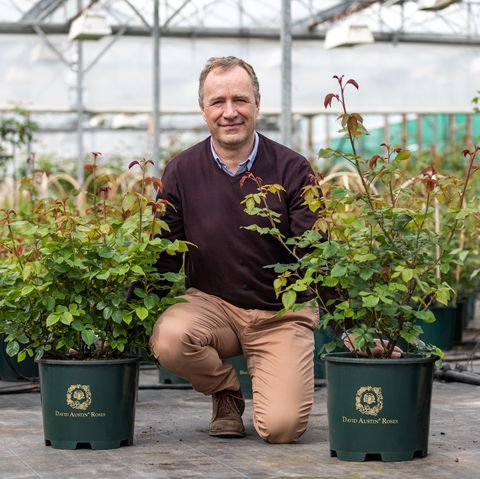 David Austin Roses will unveil two new English Rose varieties at the RHS Chelsea Flower Show