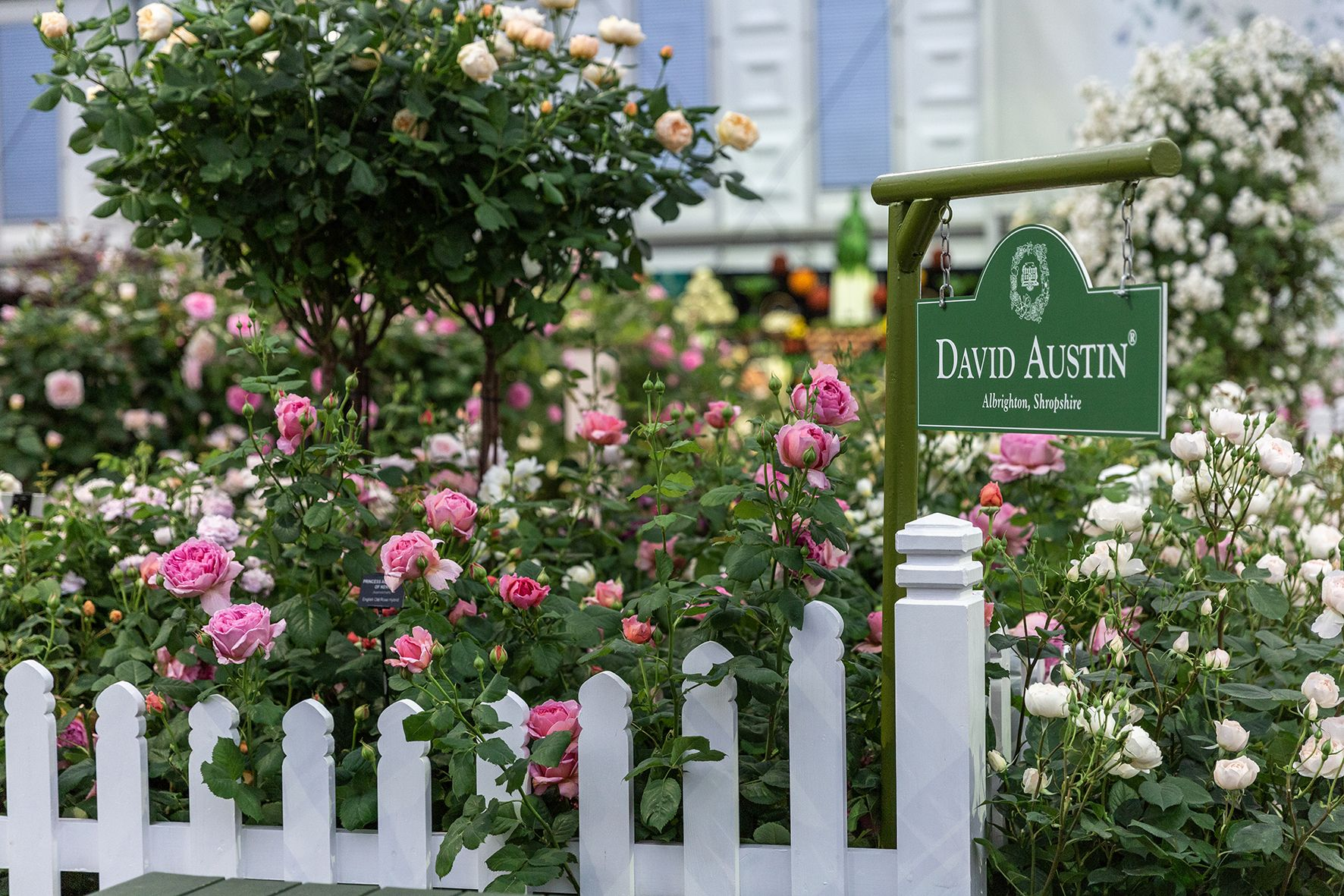 Chelsea Flower Show 2019: David Austin Roses win 25th Gold medal