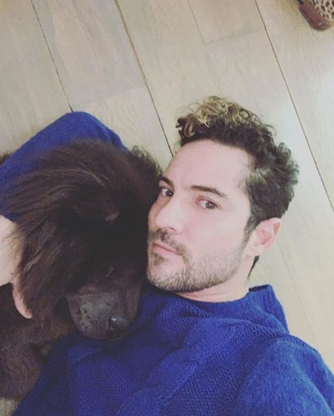 Hair, Face, Nose, Dog, Canidae, Hairstyle, Human, Interaction, Companion dog, Selfie,