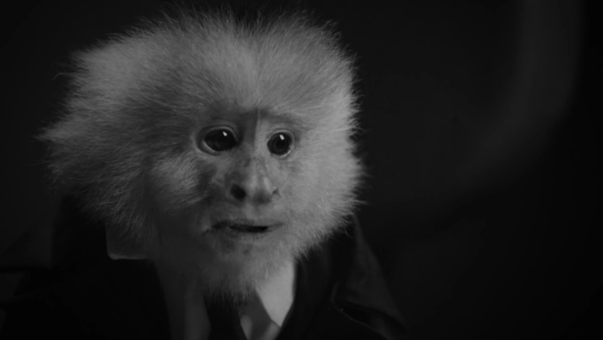 David Lynch interroga a un mono en su nuevo corto - What did Jack do
