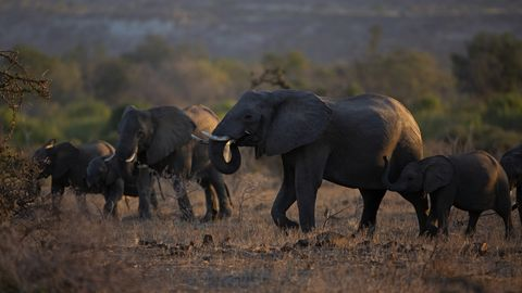 de beers拯救大象、cartier資助獅子基金會…奢侈品牌投入野生動物保育行動
