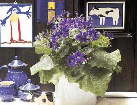 Flower, Purple, Blue, Plant, Lavender, Violet, Centrepiece, Cut flowers, Flowering plant, Still life,