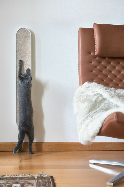 Wood, Room, Furniture, Floor, Hardwood, Leg, Chair, Table, Cat, Flooring,