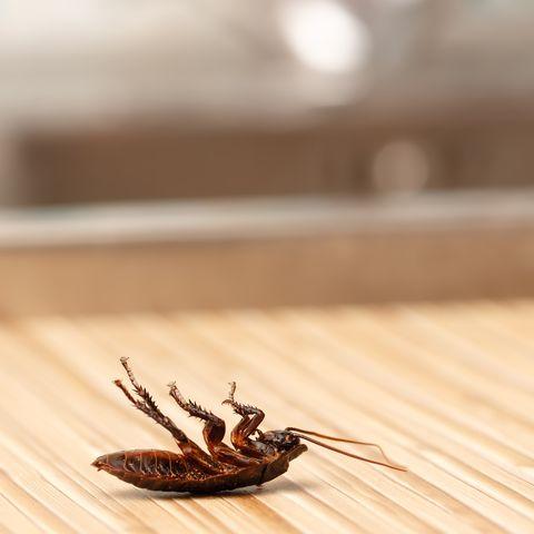 best cockroach killers traps
