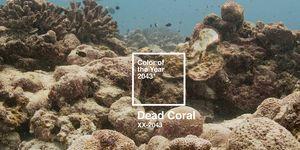 Dead Coral de Pantone