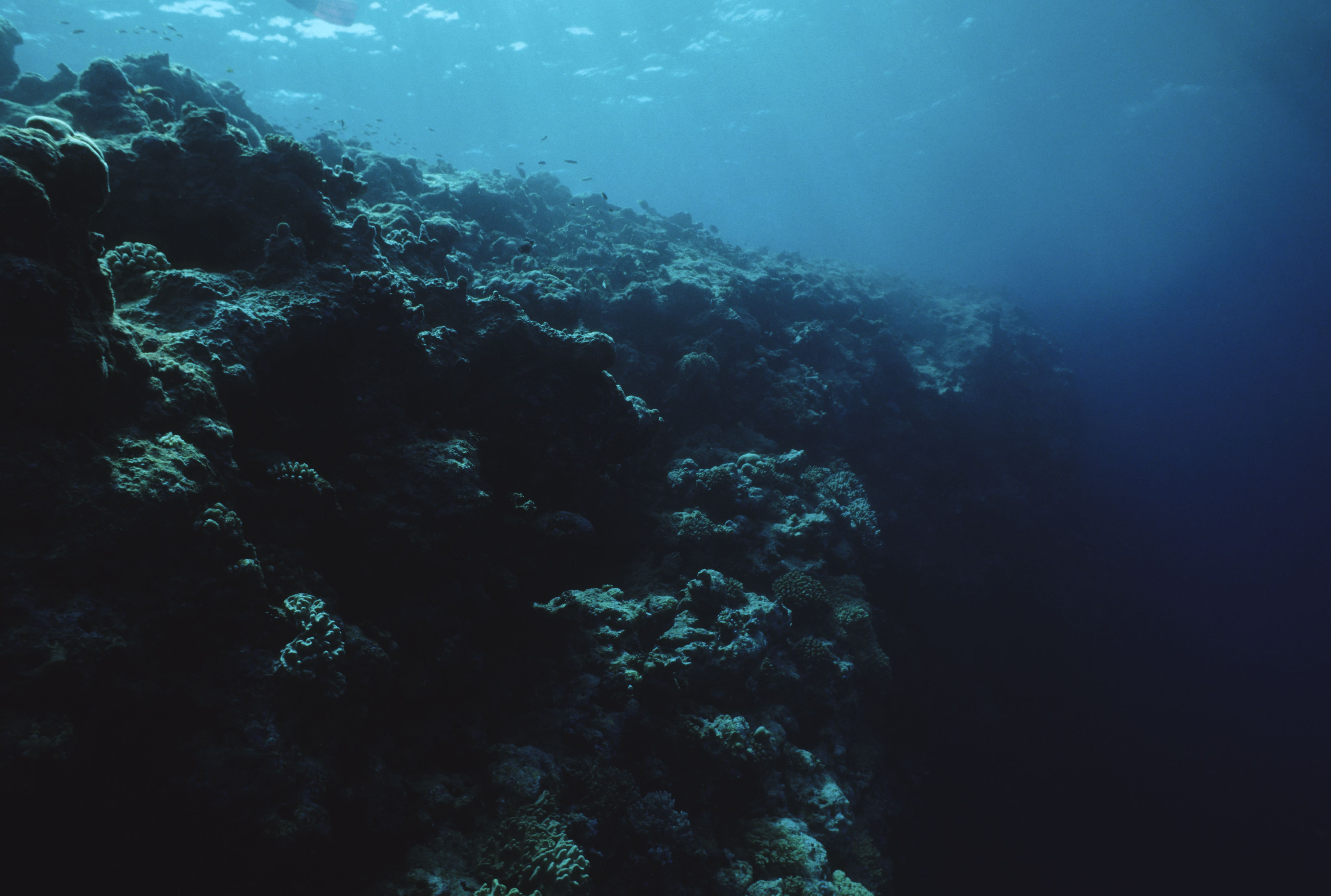 Our Oceans Are Full of Vast Dead Zones Without Oxygen