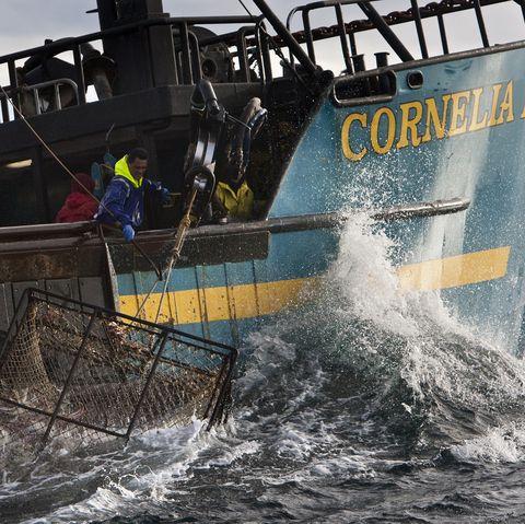 deadliest catch cornelia marie