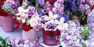 Guía para decorar con plantas por colores