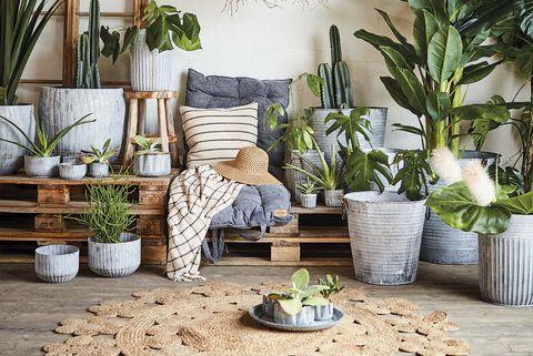 decoración con palés y plantas de interior