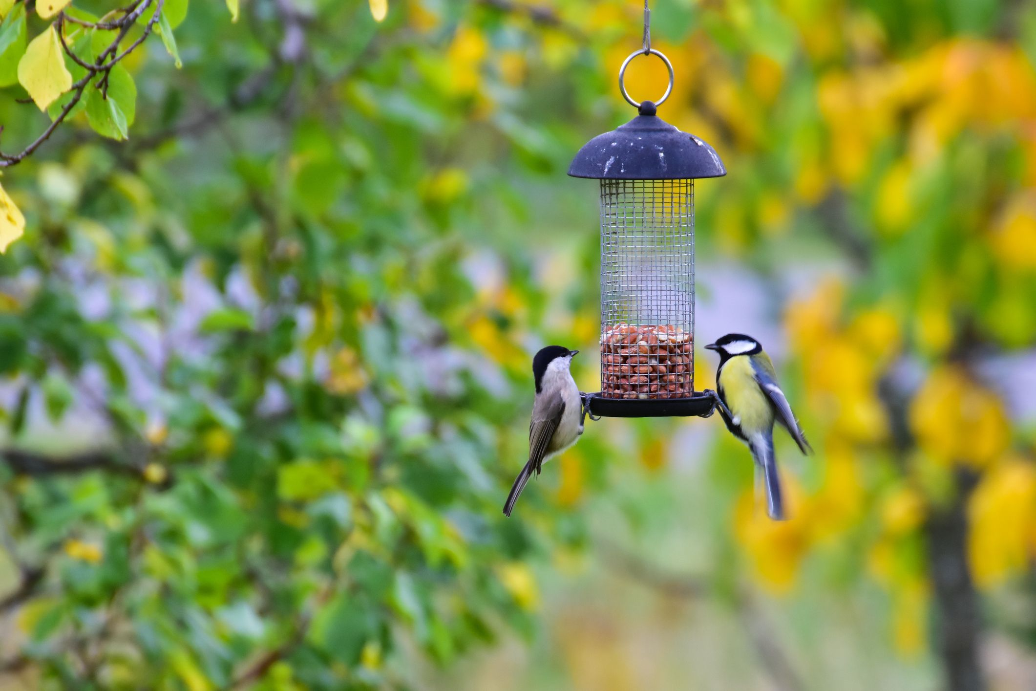 The Best Squirrel-Proof Bird Feeders You Can Buy for Your Backyard