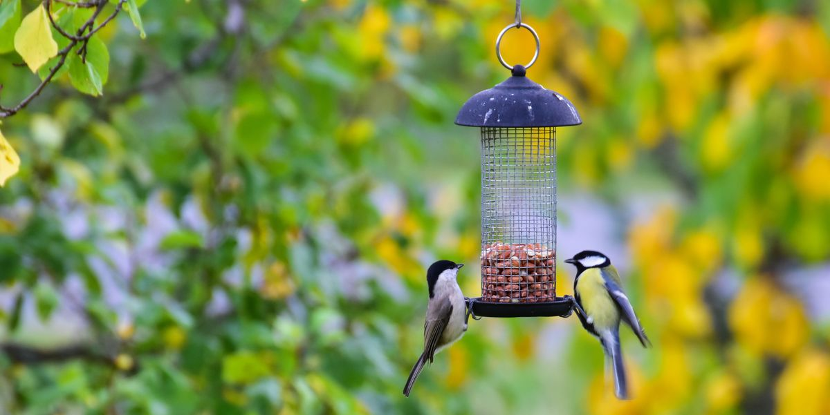 The Best Squirrel Proof Bird Feeders You Can Buy Online