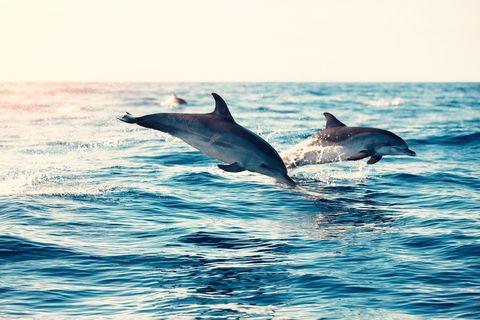 Il video dei delfini tornati nel porto di Cagliari oggi deserto