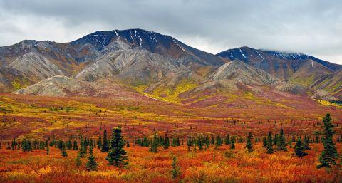 denali in autumn, alaska, usa