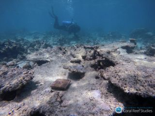 coral reef australia bleaching