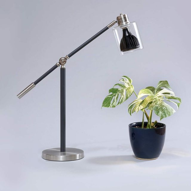 desk lamp over plant