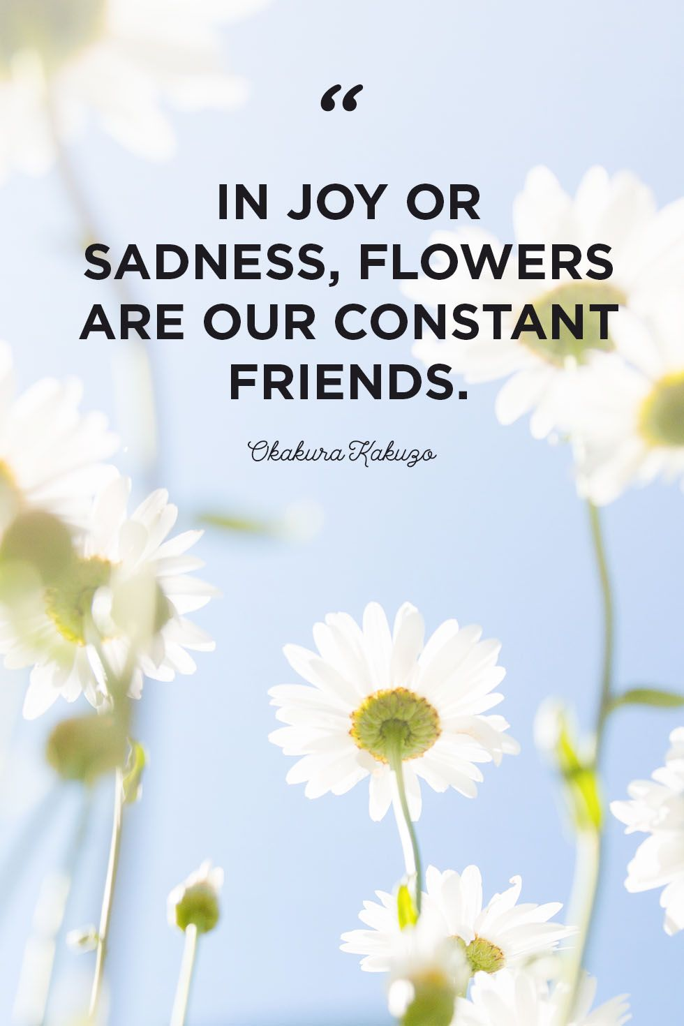 30 Inspirational Flower Quotes - Cute Flower Sayings About Life and Love