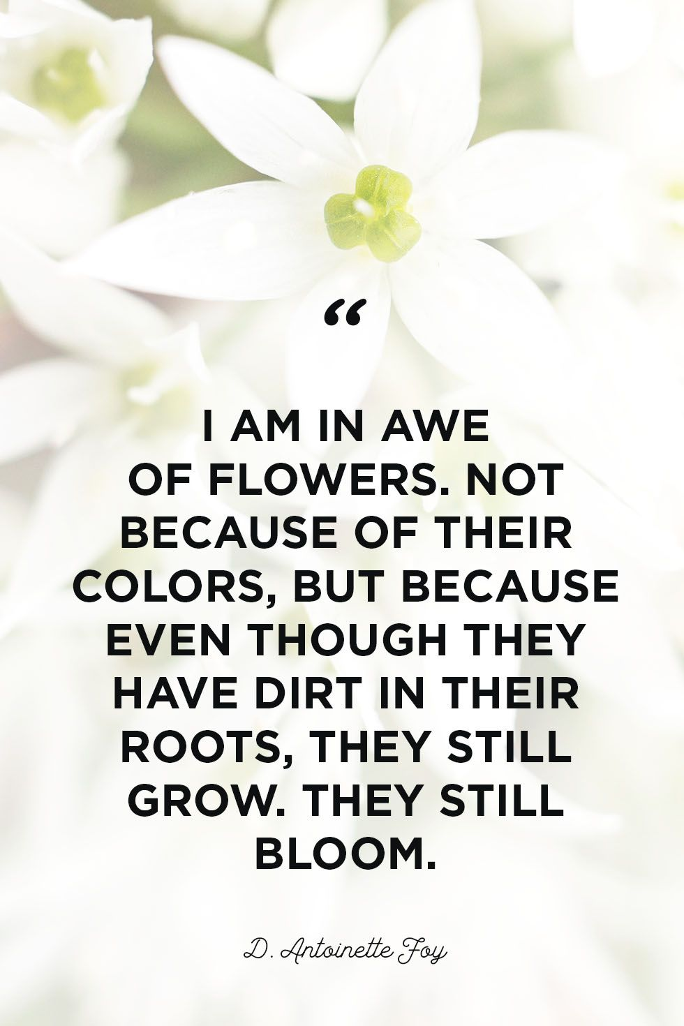 Quotes About Spring And New Beginnings The Celebration Of Life And