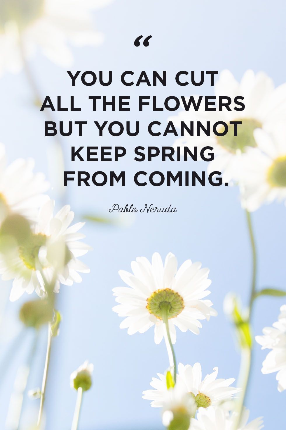 50 Inspirational Flower Quotes Cute Flower Sayings About Life