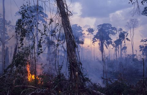 Destruction - Amazon, Brazil,Vicinitiy Rio Branco, Burning The Forest To Enlarge Cattle Ranches,
