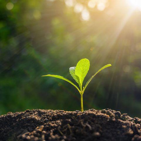tallo de planta verde saliendo de la tierra
