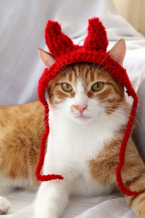 devil cat halloween costume