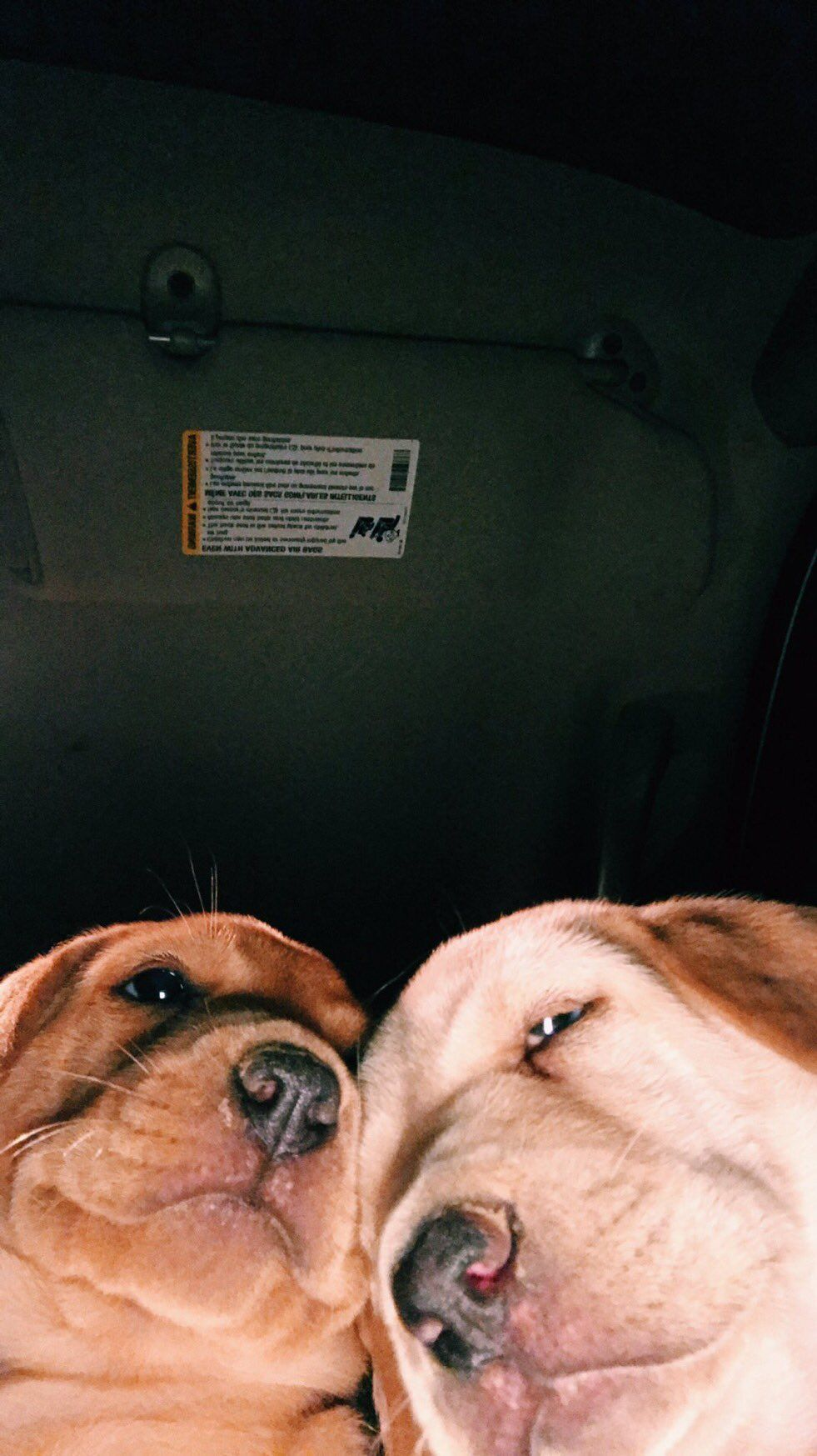 These Super Cute Puppies Are Your Parents Taking Selfies, and It's Perfect