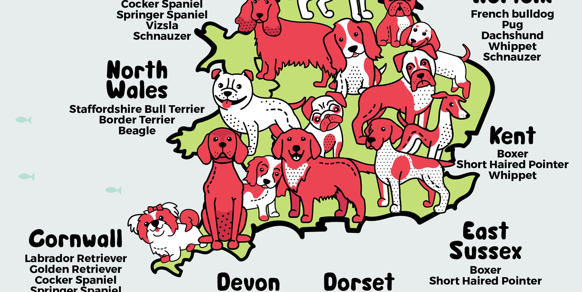 The best UK staycation spot for each dog breed, according to new map