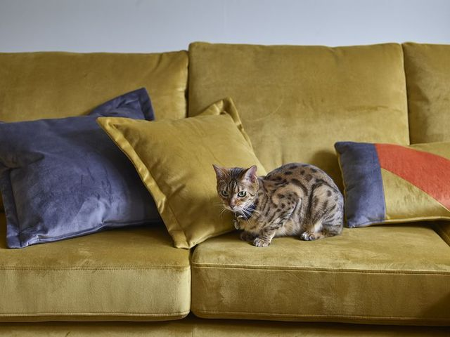 darcy velvet sofa in mustard, house beautiful collection at dfs