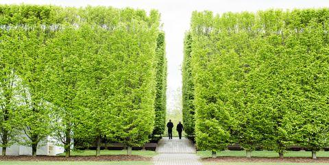 Tree, Green, Shrub, Woody plant, Grass, Hedge, Plant, thuya, Botany, Leaf,