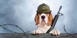 Dieren in de oorlog
