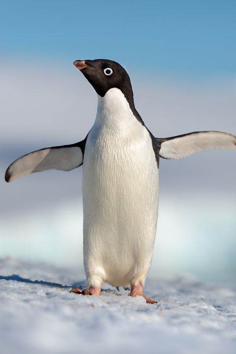 disney movies 2019 penguins