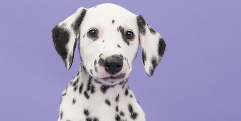 The most popular Disney-inspired pet names right now