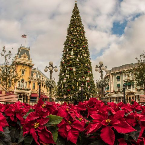 Disneyland Christmas Decorations By The Numbers How Disney Decorates For The Holidays