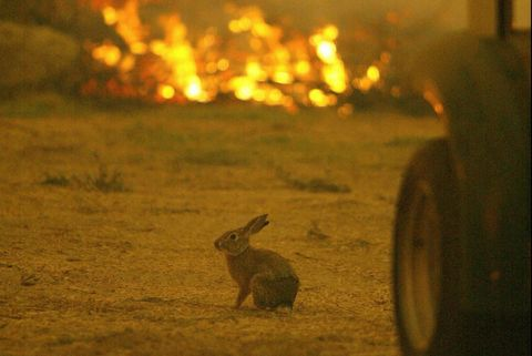 A distressed rabbit doesn't know where t