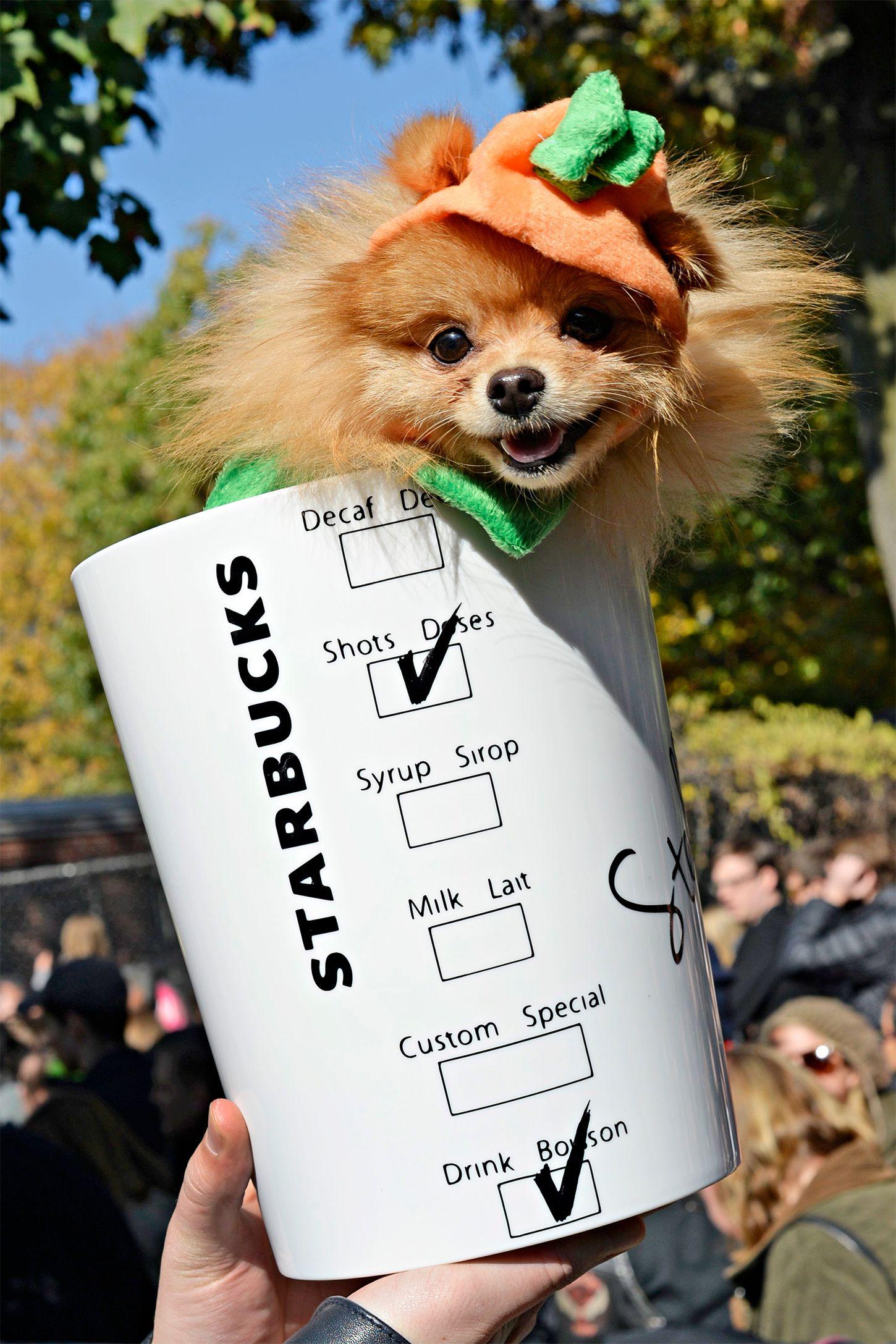 pumpkin latte dog halloween costume
