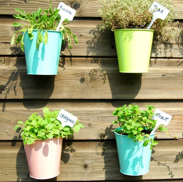 herbs in the garden in colorful jars